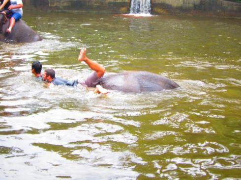 Bali Elephant ride - 1
