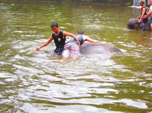 Bali Elephant ride - 2