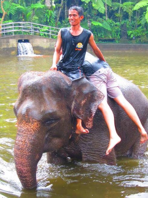 Elephant rodeo