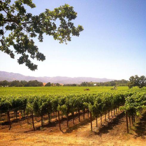 Vineyard - Napa
